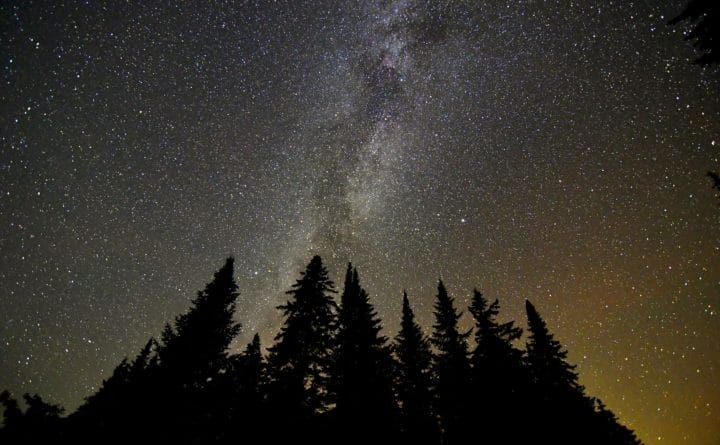 pine trees and starry sky