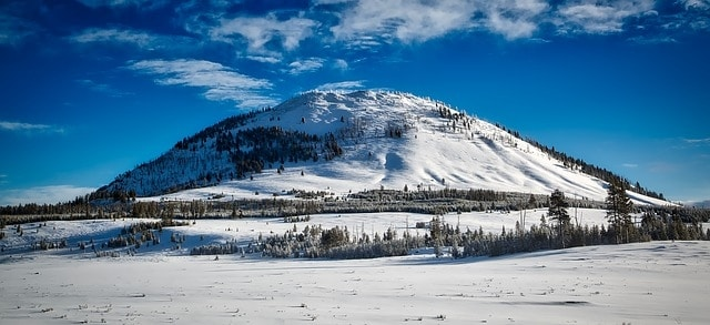 winter scene of mountain with pine trees