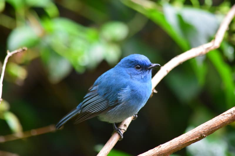 blue bird on tree limb