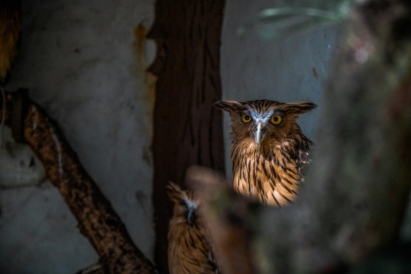 owl in tree looking at camera