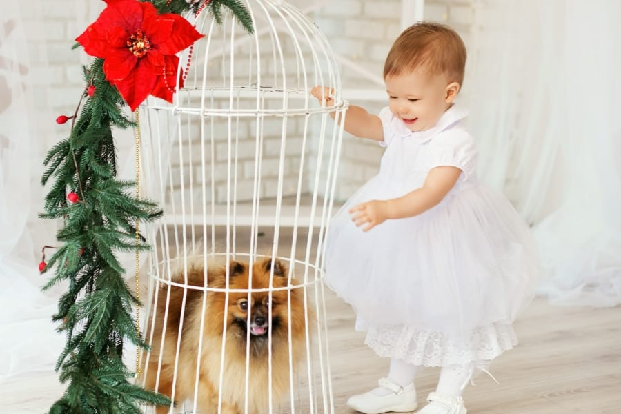 baby with dog in christmas dress