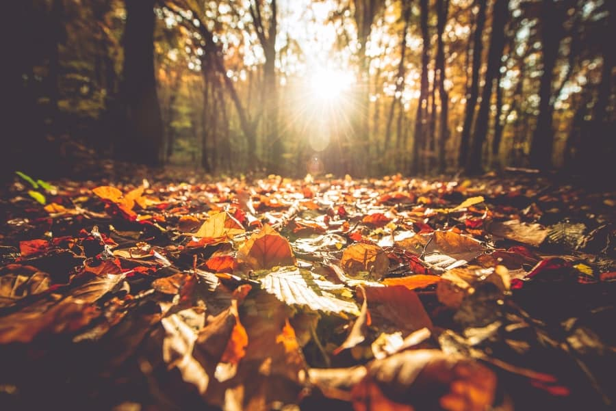 fall leaves on ground of forest