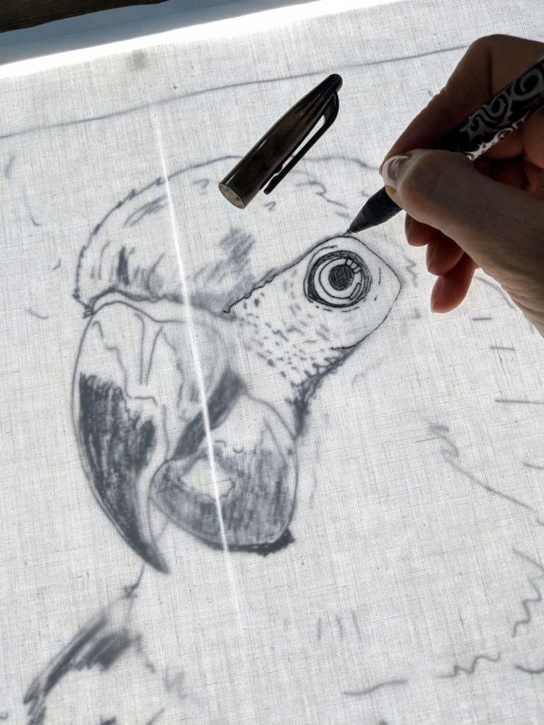parrot being traced on light box