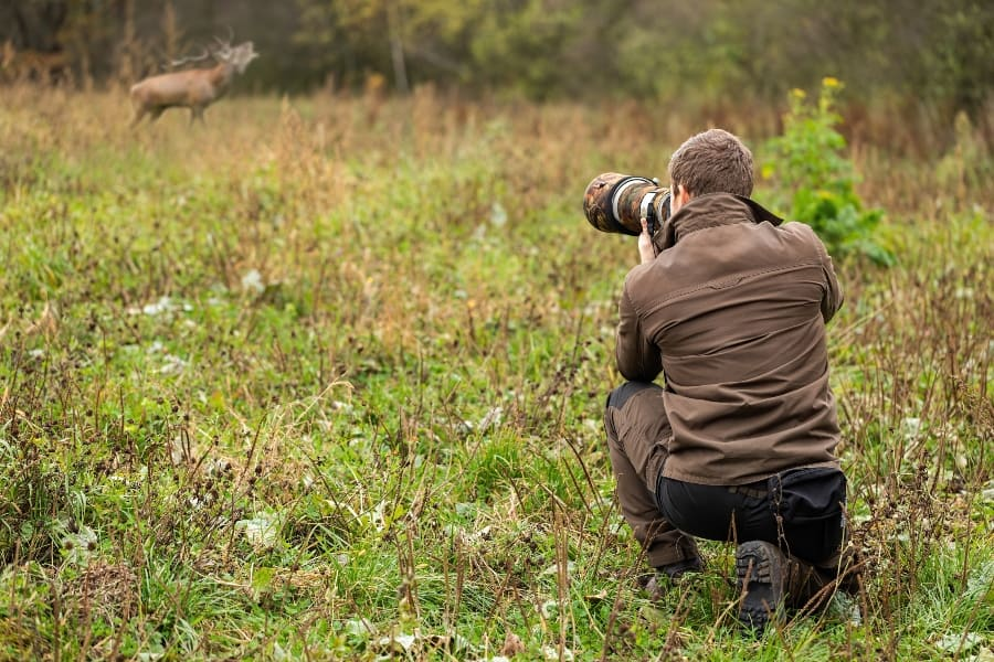 photographer taking picture of elk