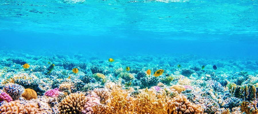 stunning coral reef in sunlight