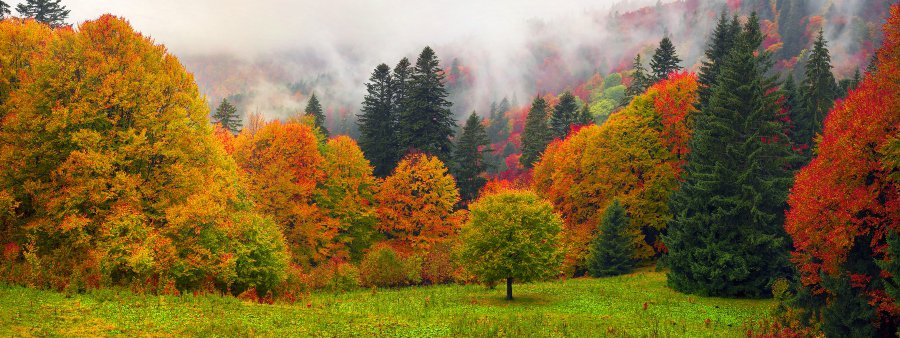 tree line in fall with fog