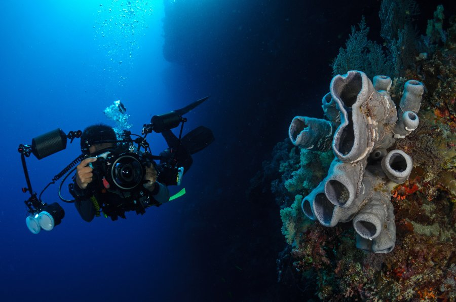 underwater photographer taking picture of coral