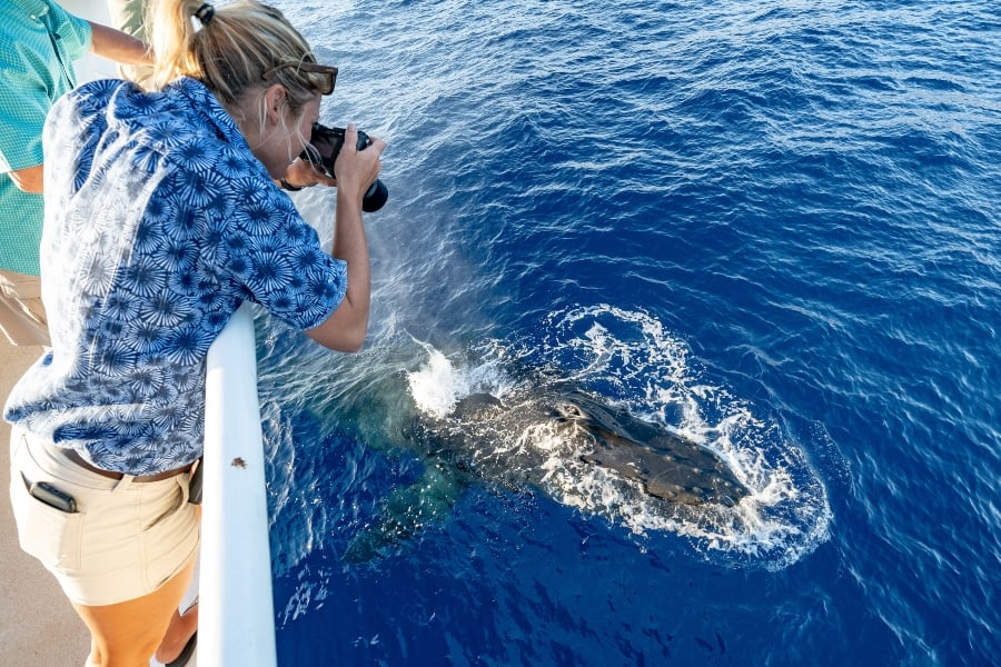 woman photographing whale