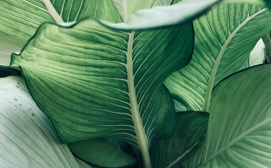 close up of the leaves of a house plant