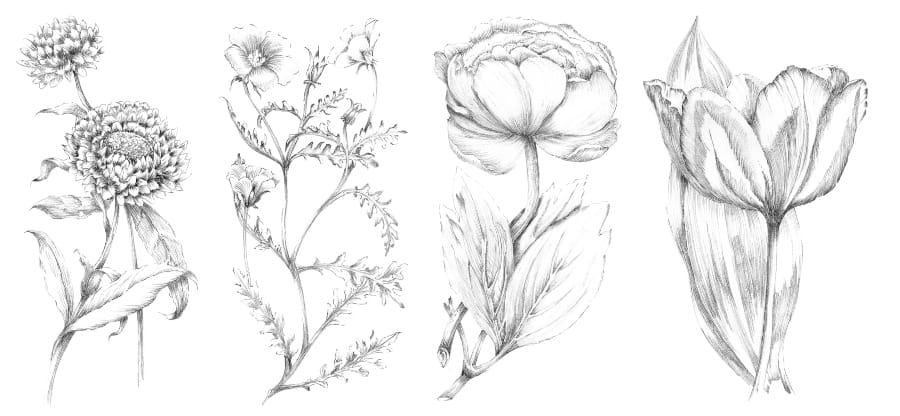 pencil sketches of flowers